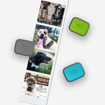 dogs-with-whistle3-gps-pet-tracker-and-activity-monitor