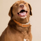 happy-dog-with-link-smart-dog-collar
